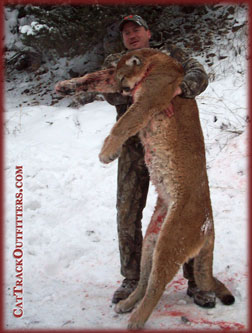 guided mountain lion hunts in Colorado