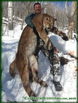 Colorado Mountain Lion Hunts