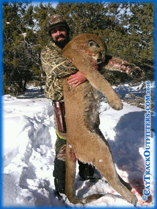 Mountain lion hunt with cattrack outfitters - 2016